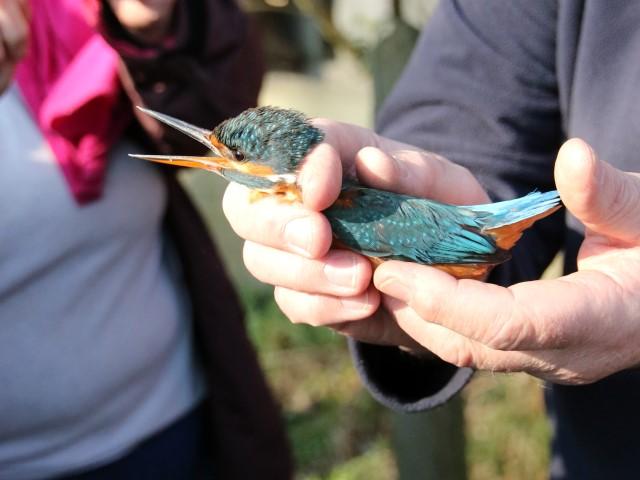 Bird Fair 46 Langford Lakes Ralph Harvey 24.02.18 WWT (Small)