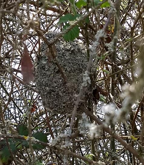 LTT Nest